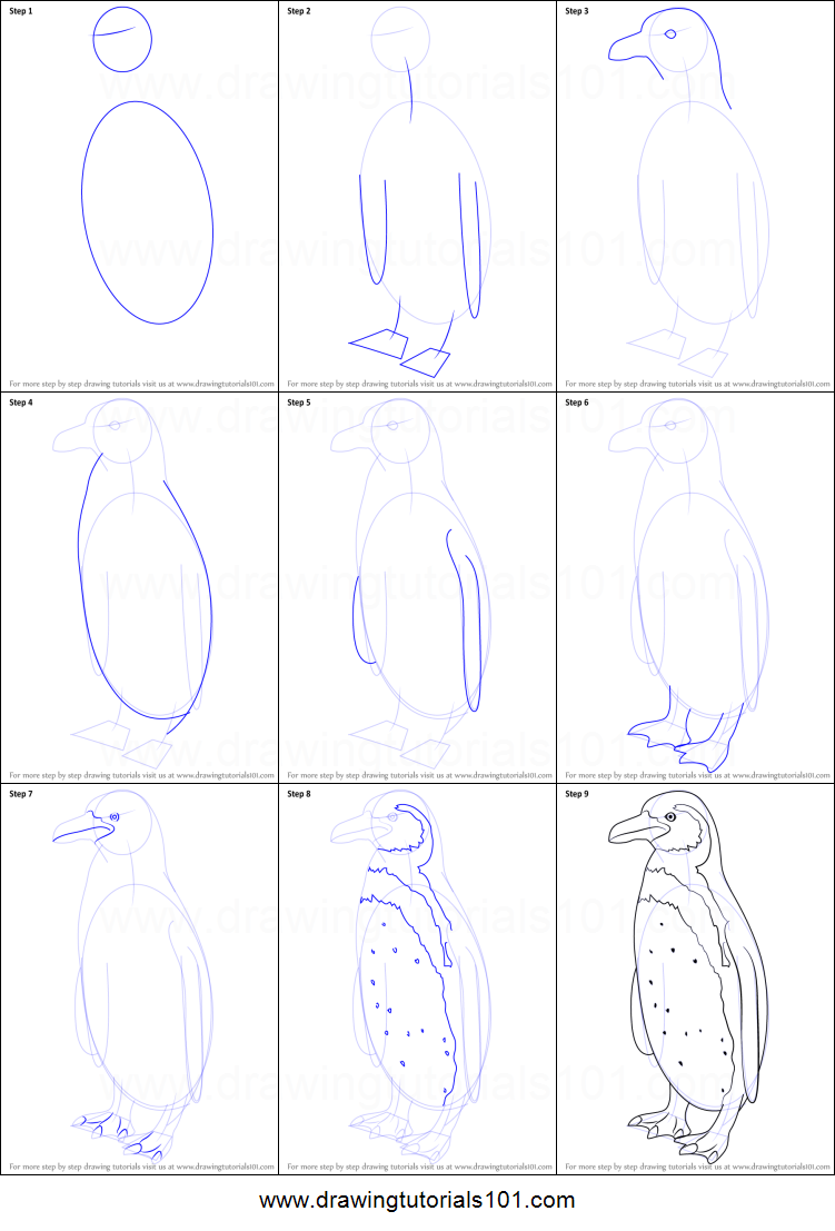 how to draw a humboldt penguin printable step by step