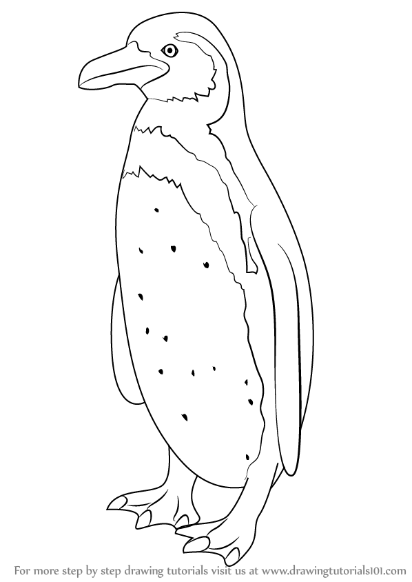 Learn How to Draw a Humboldt Penguin