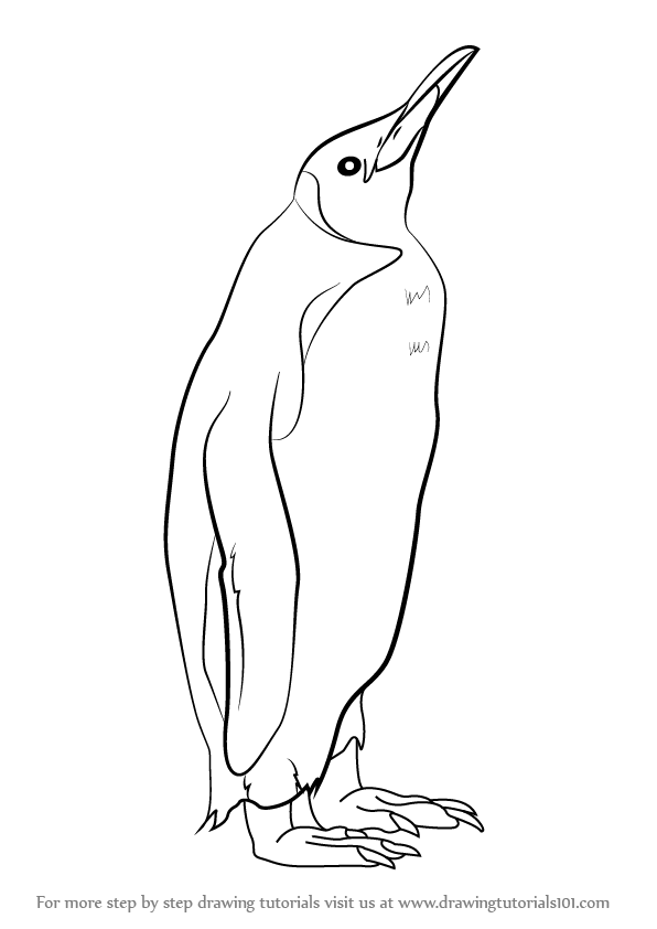 Line Drawing Penguin : Learn how to draw a king penguin antarctic animals step