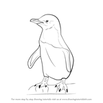 How to Draw a Little Blue Penguin