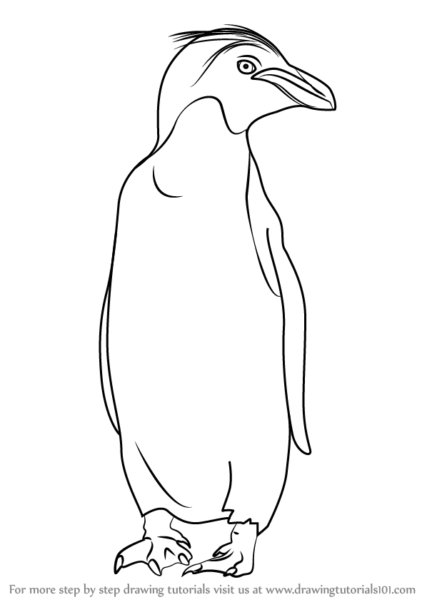 Step By Step How To Draw A Macaroni Penguin
