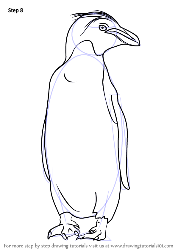 Learn How To Draw A Macaroni Penguin Antarctic Animals