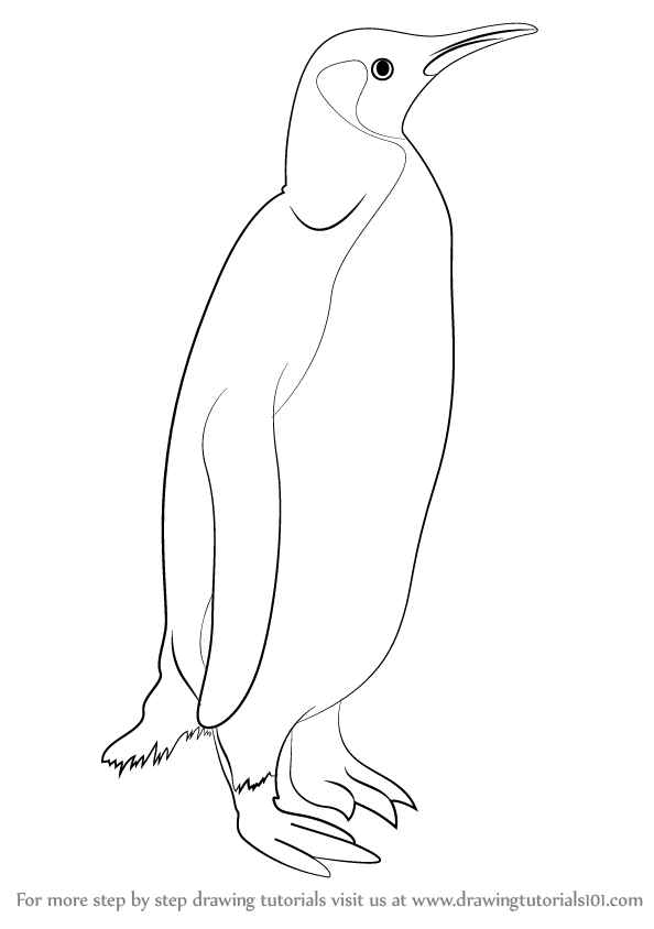 learn how to draw a penguin antarctic animals step by step