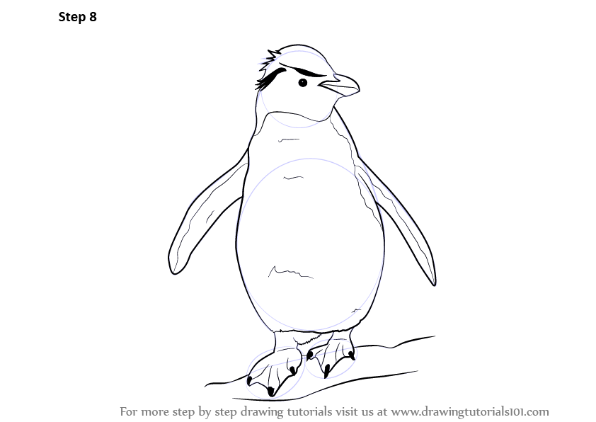 learn how to draw a rockhopper penguin  antarctic animals