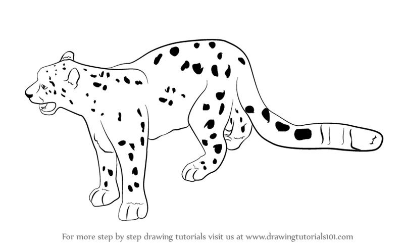 how to draw leopard print step by step