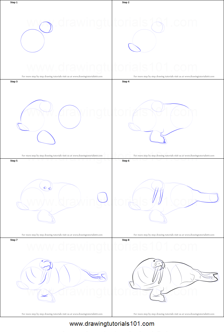 How to Draw a Walrus printable