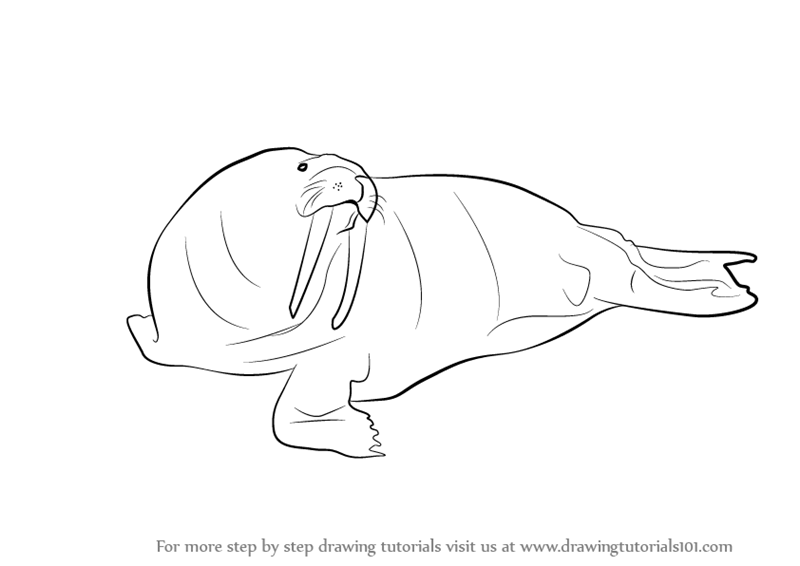 Learn How to Draw a Walrus (Antarctic Animals) Step by ...
