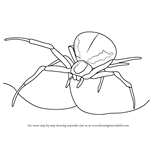 How to Draw a Crab Spider