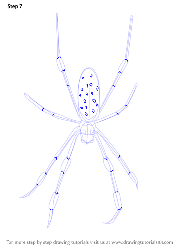 Step By Step How To Draw A Golden Silk Orb Weavers