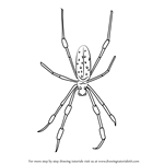 How to Draw a Golden Silk Orb-Weavers