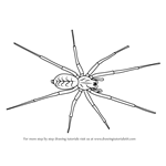 How to Draw a House Spider