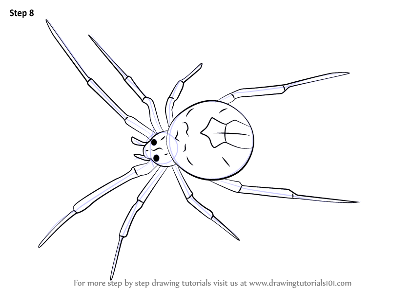 Learn How To Draw A Redback Spider Arachnids Step By