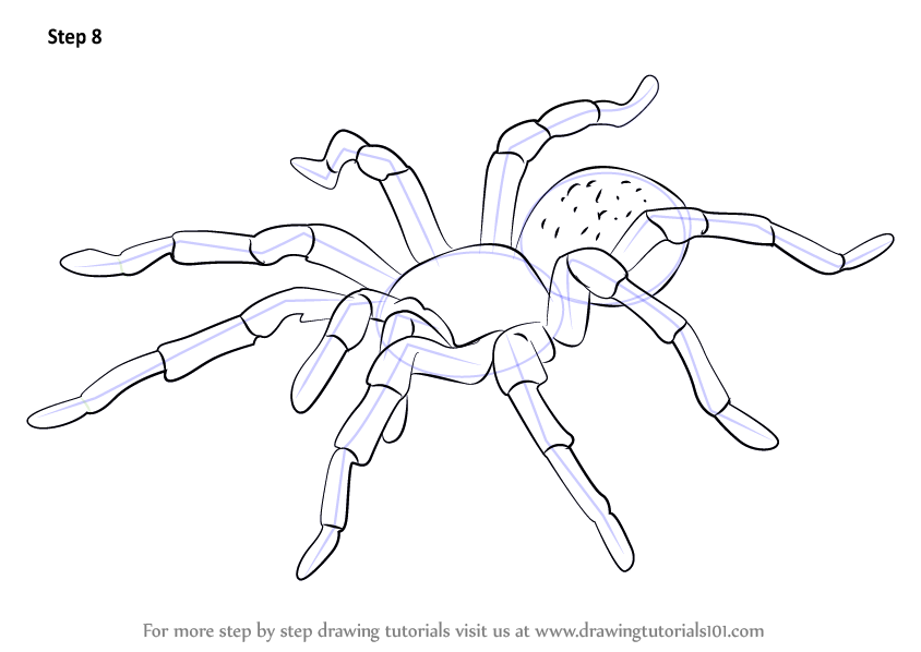Learn how to draw a tarantula arachnids step by step for How to make doodle art