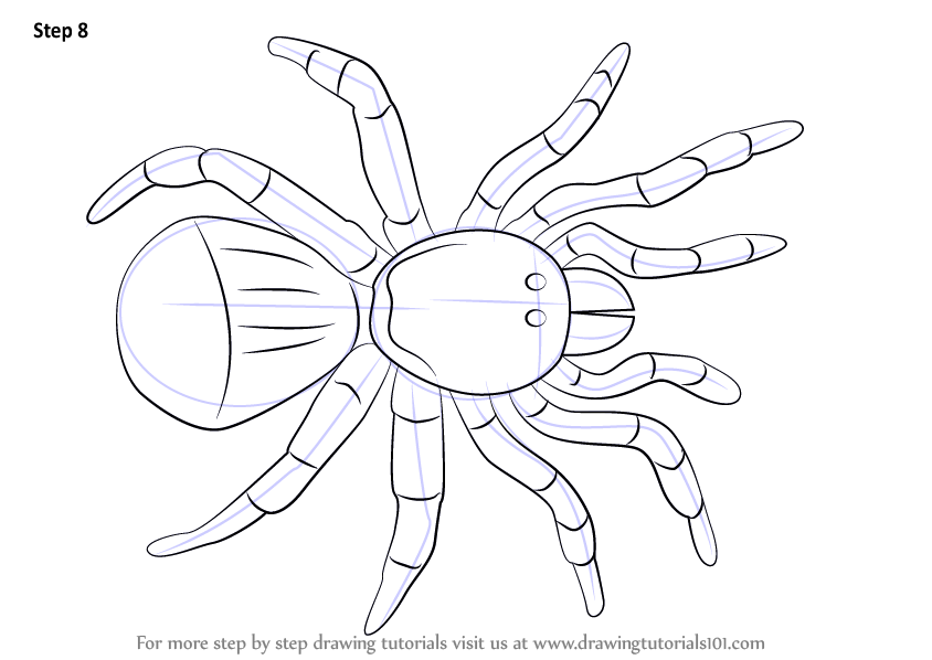 Learn how to draw a trapdoor spider arachnids step by for How to make doodle art