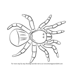 How to Draw a Trapdoor Spider