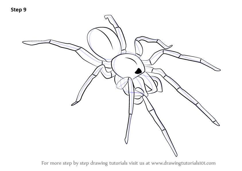 learn how to draw a woodlouse spider  arachnids  step by