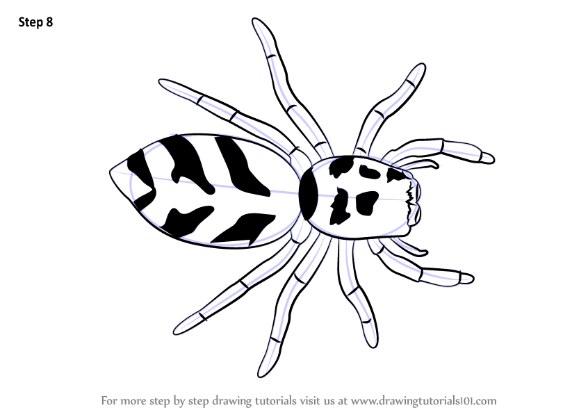 Learn How To Draw A Zebra Spider Arachnids Step By Step