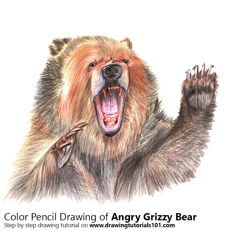 Angry Grizzly Bear Colored Pencils - Drawing Angry Grizzly ...