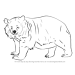 How to Draw an Asian black bear