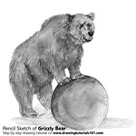 Grizzly Bear Pencil Sketch