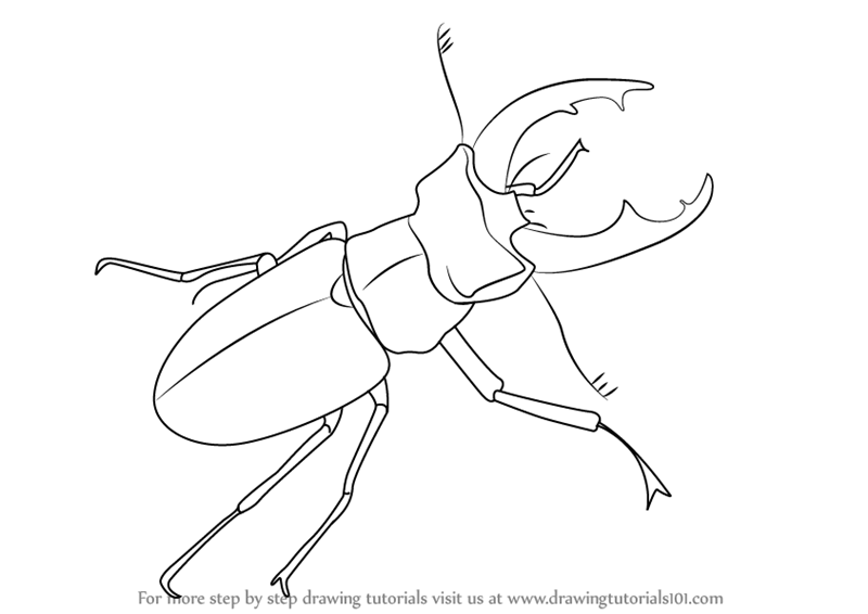 Learn How to Draw a Stag Beetle