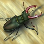 how to draw a beetle easy
