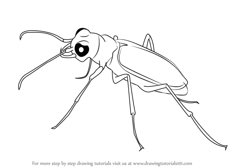 learn how to draw a tiger beetle beetles step by step drawing