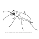 How to Draw a Tiger Beetle