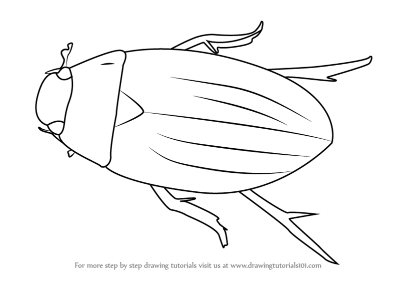 learn how to draw a water beetle beetles step by step drawing