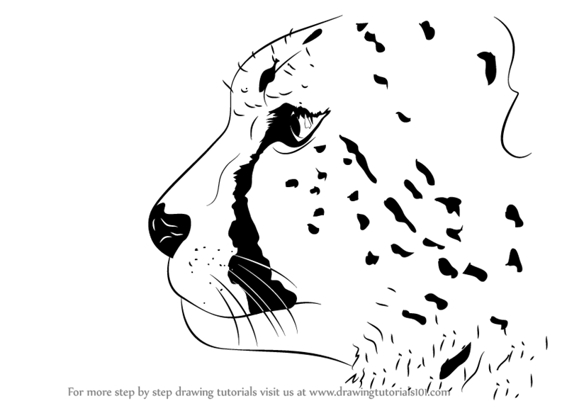 Learn How To Draw A Cheetah S Head Big Cats Step By Step Drawing