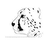 How to Draw a Cheetah's Head