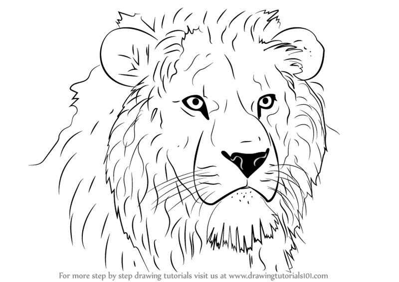 Animals Black And White Elephants 10000 Lions Big Cats: Lion Head Drawing Easy