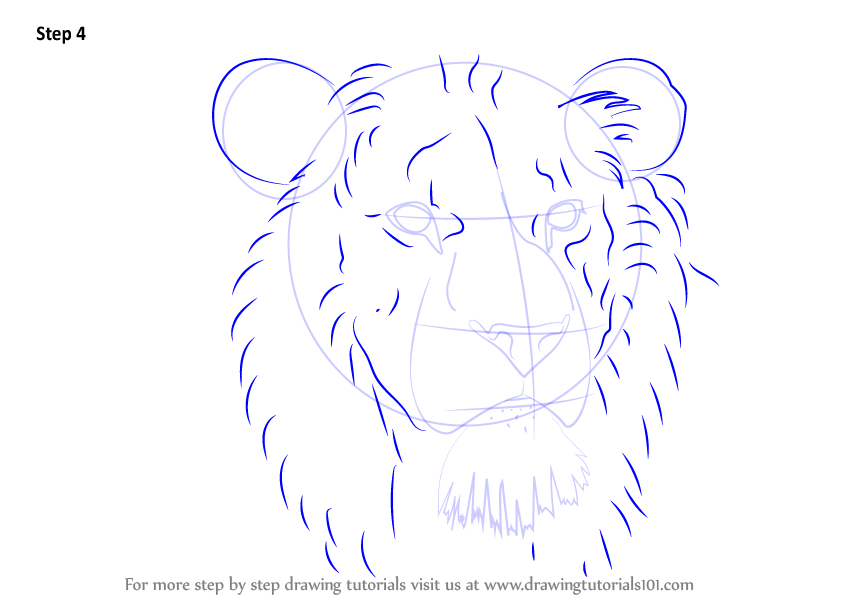 Learn How To Draw Lion Head Big Cats Step By