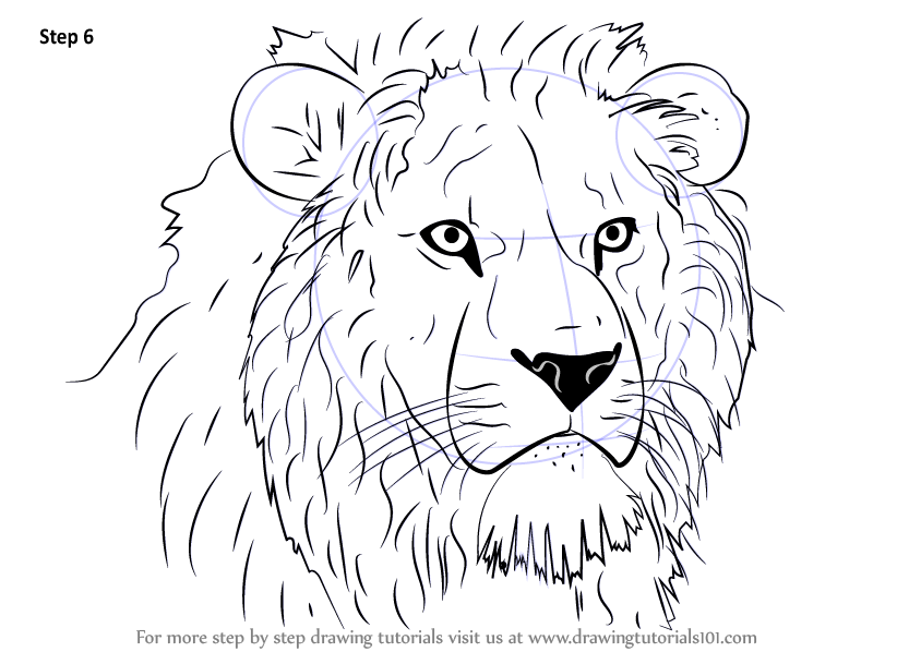 Step by Step How to Draw Lion Head