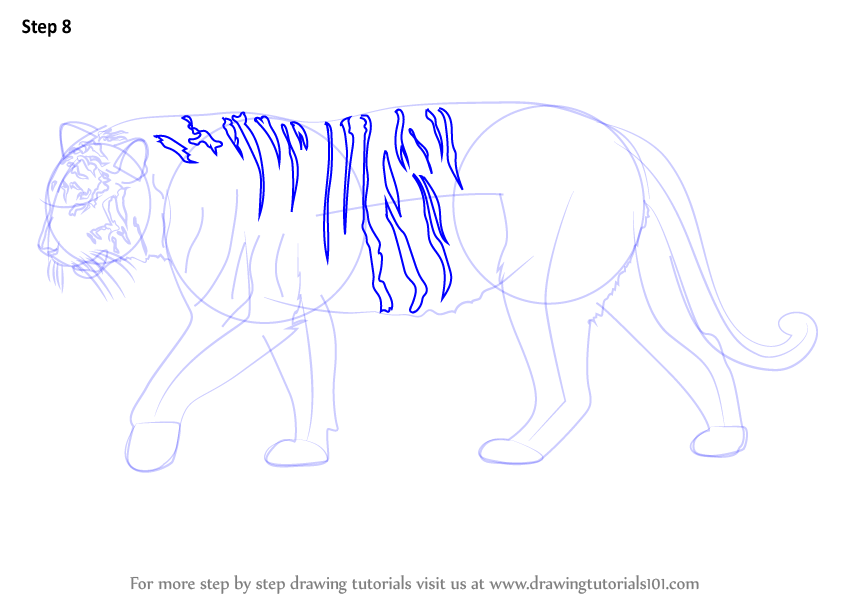 how to draw a tiger step by step