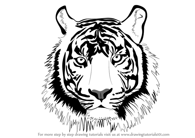 Tiger head drawing tutorial - photo#12