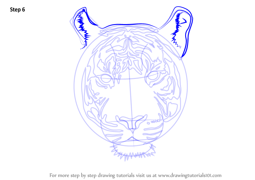 Tiger head drawing tutorial - photo#20