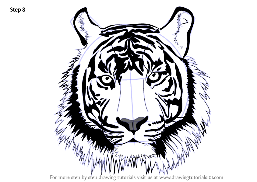 Learn how to draw a tiger face big cats step by step drawing shop related products publicscrutiny Images