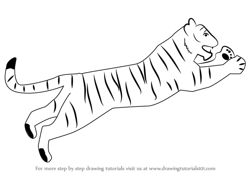 How to draw a cute tiger step by step - photo#27