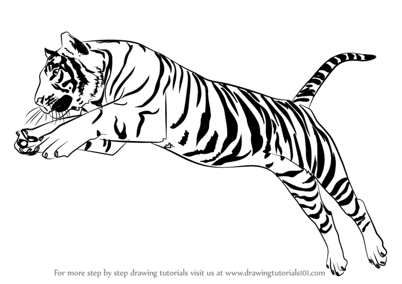 Learn How to Draw a Tiger Jumping (Big Cats) Step by Step : Drawing ...