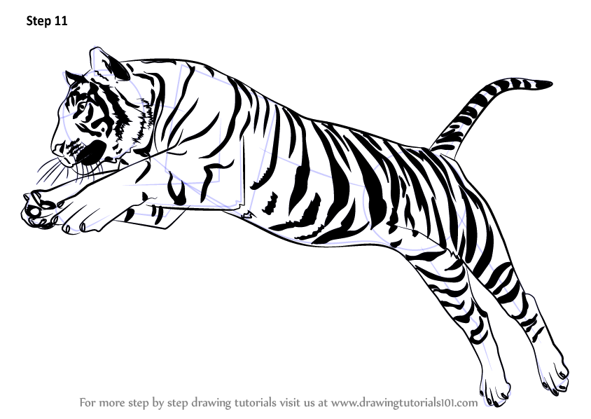 Learn how to draw a tiger jumping big cats step by step drawing tutorials