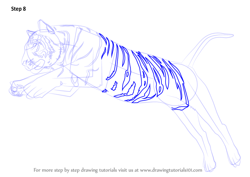 learn how to draw a tiger jumping big cats step by step
