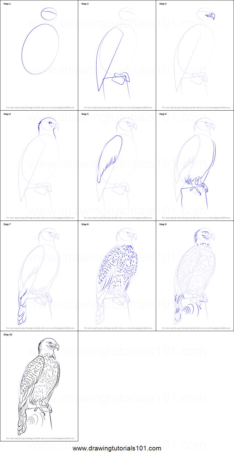 Step by step drawing tutorial on how to draw bald eagle full body