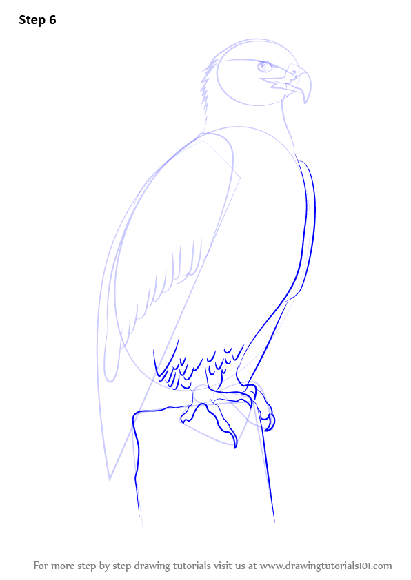 how to draw a eagle body step by step easy