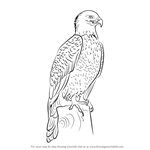 How to Draw Bald Eagle Full Body