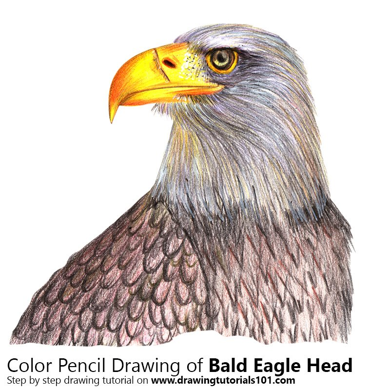 how to draw a simple bald eagle head