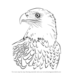 How to Draw Bald Eagle Head
