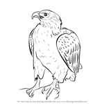 How to Draw a Bellied Eagle
