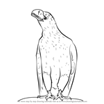 How to Draw an Eagle Sitting