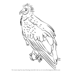 How to Draw an Egyptian Vulture